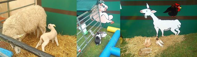 Animals at the Farm*