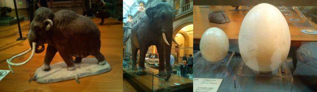 Woolly Mammoth, AnElephant, an Ostrich Egg dwarfed by Elephant Bird Egg