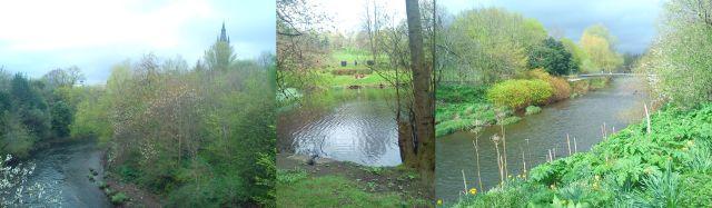 Glasgow University, a Grey Heron in Kelvingrove Park, the River Kelvin