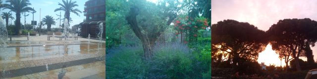 Dancing Fountains, Olive Tree in Lavender, Parasol Pines