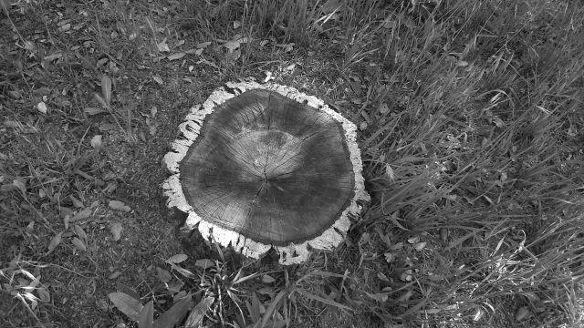 a tree by anelephantcant