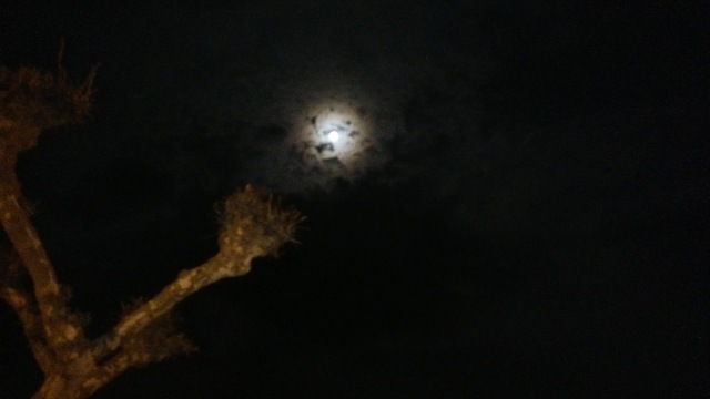 eclipse by anelephantcant